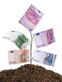 isolerad pengarväxtwhite arkivfoton