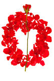 isolerad petalsred steg Fotografering för Bildbyråer