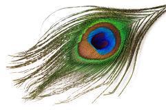 Isolerad påfågelfjäder Arkivbilder