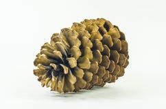 Isolerad pinecone Royaltyfri Foto