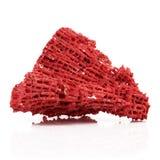 Isolerad röd korall i vit bakgrund royaltyfri bild