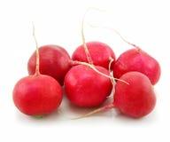 isolerad röd mogen white för rädisor Royaltyfria Bilder