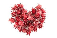 Isolerad röd roselle Arkivbild