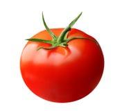 isolerad röd tomat royaltyfri bild