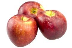 isolerad röd white för äpplen bakgrund Fotografering för Bildbyråer