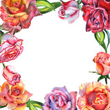 Isolerad ram för vildblommarosblomma i en vattenfärgstil Royaltyfria Bilder