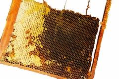 Isolerad ram med ny och doftande bärnstensfärgad honung arkivfoton