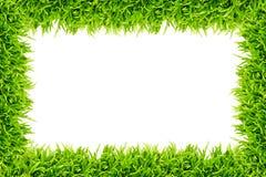 isolerad ramgräsgreen Royaltyfri Foto