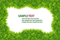 isolerad ramgräsgreen Royaltyfri Fotografi