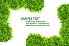 isolerad ramgräsgreen Arkivfoto