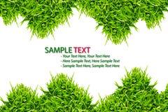 isolerad ramgräsgreen Arkivfoton