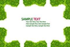 isolerad ramgräsgreen Fotografering för Bildbyråer