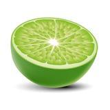 Isolerad realistisk kulör halva av saftig limefrukt för grön färg med skugga på vit bakgrund Royaltyfria Foton
