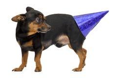 Isolerad rolig hund Arkivfoto