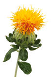 isolerad safflower Royaltyfri Foto