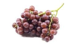 En samla i en klunga av purpurfärgade druvor på en gräsplan förgrena sig arkivfoton