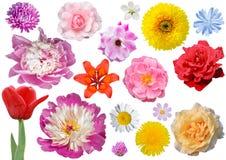 Isolerad samling av blommor Royaltyfri Bild