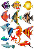 isolerad sats för fisk illustration Royaltyfria Foton