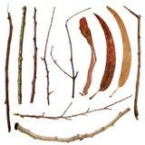 Isolerad set dropp för leavesfilialbuske royaltyfria bilder