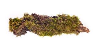 Isolerad skogmossa Royaltyfri Bild