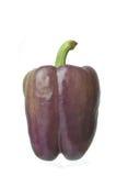Isolerad spansk peppar royaltyfri bild