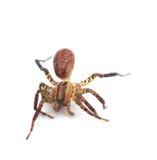 isolerad spindelwhite Royaltyfria Foton