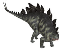 Isolerad Stegosaurus Arkivfoto
