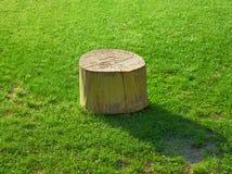 Isolerad stubbe på mejat gräs Arkivfoton