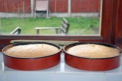 isolerad svampwhite för bakgrund cake Royaltyfri Foto
