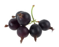 isolerad svart vinbär royaltyfri bild