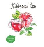 isolerad teawhite för bakgrund hibiskus vektor illustrationer