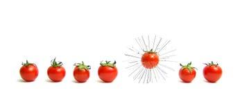 isolerad tomat Arkivbild