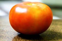 Isolerad tomat ny tomat royaltyfri fotografi