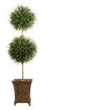 isolerad topiarywhite för boll double arkivbilder