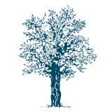 isolerad tree Royaltyfri Illustrationer