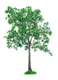 isolerad tree Arkivfoton