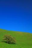 isolerad tree för gräs green Royaltyfria Bilder