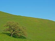 isolerad tree för gräs green Royaltyfri Bild