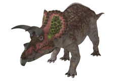 Isolerad Triceratops Arkivbild