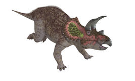 Isolerad Triceratops Royaltyfri Bild