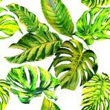 Isolerad tropisk modell för Hawaii sidapalmträd i en vattenfärgstil royaltyfri illustrationer