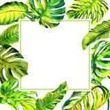 Isolerad tropisk ram för Hawaii sidapalmträd i en vattenfärgstil Royaltyfri Foto