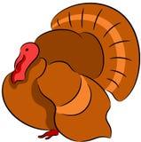 Isolerad Turkiet fågel Arkivfoto