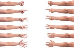 Isolerad uppsättning av den mänskliga handsamlingsvisningen nummer ett till fem Royaltyfria Bilder