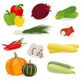 Isolerad uppsättning av grönsaken Royaltyfria Bilder