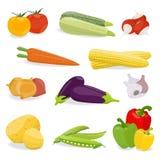 Isolerad uppsättning av grönsaken Arkivfoton