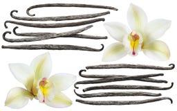 Isolerad uppsättning för beståndsdel för vaniljblommapinne arkivbild