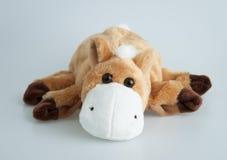 Välfylld brun häst Fotografering för Bildbyråer
