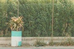Isolerad växt in i en kulör behållare Royaltyfria Bilder