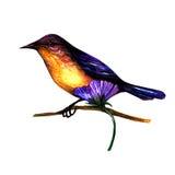 Isolerad vattenfärgfågel Arkivbilder